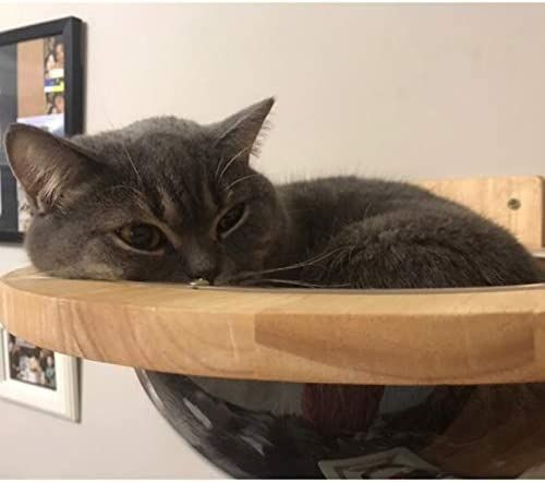 TINTON LIFE Wall-Mounted Wooden Cat Space Clear Capsule Cat Bed Small Pets Bed Cat Toy Cat Furniture(Large Capsule)