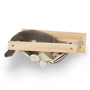 A Cat Sleeping Space