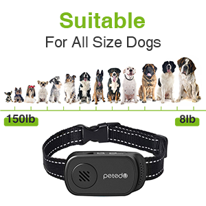 All Size Dogs